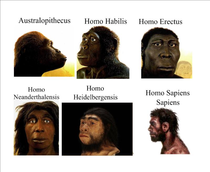http://laboratoriodesociales.files.wordpress.com/2007/10/evolucion-hominidso_1.png